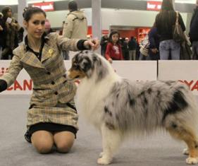 banner2 esp regionale canina monte grappa 2014