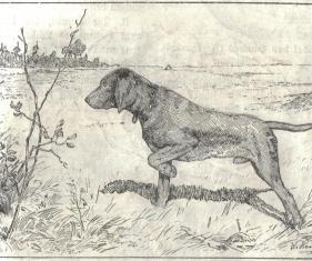 Heubach_hunting_dog